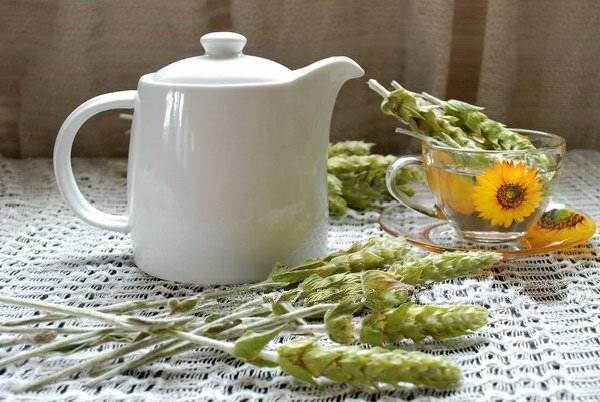 Le Sideritis scardica: plante grecque aux mille merveilles