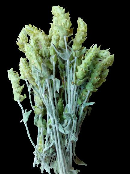 bouquet mursalski ou tisane des montagnes bulgares