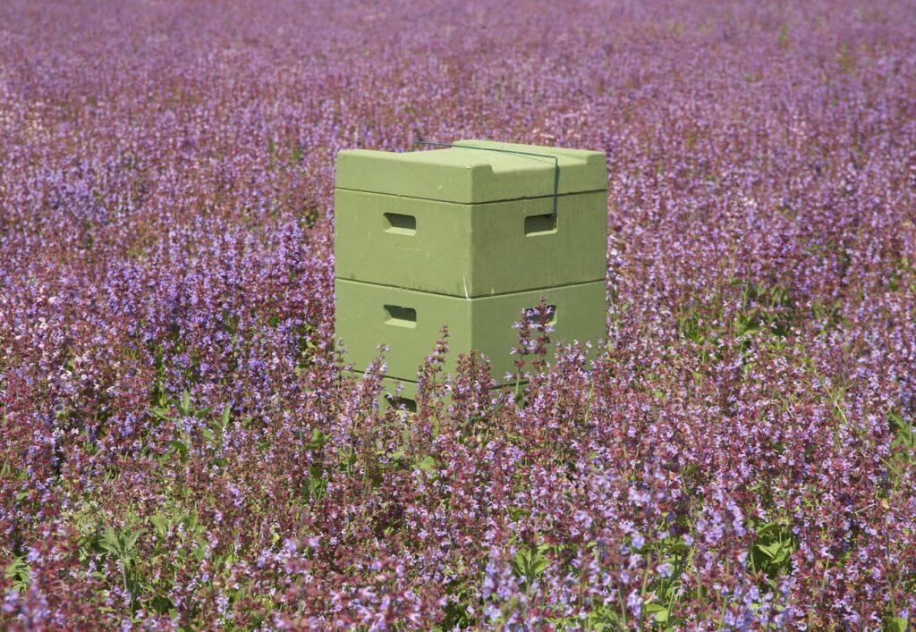 Le miel de sauge sur l'île croate de Cres